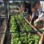 St. Andrew's School, DE Photo #9 - Our commitment to sustainability and protecting our natural resources for future generations is evident in school and student initiatives, including our campus organic garden.